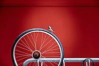 März 2020 - Rad-Ausflug