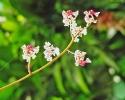 orchideenzweig_klein_20120112_1299797463