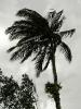 palme_im_wind_klein_20120112_1382183772