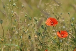 sommerwiese_20100822_1174901668