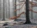 fk09_frostwald_20100510_1109447706