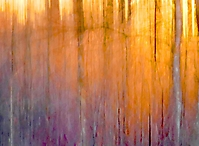 Wald. Licht