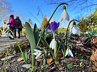 Bild 07 - Frühlingsboten