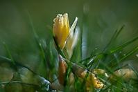 Bild 12 - Vorfrühling