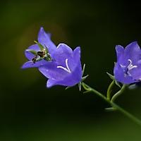 Bild 01 - Im Garten