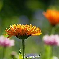 Bild 02 - In einer Blumenwiese