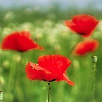 Bild 03 - Rot-Grün