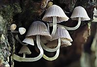 Bild 05 - In einer verborgenen Baumspalte
