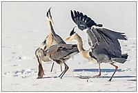 Bild 09 - wenn Zwei sich streiten - freut sich der Dritte im Bunde