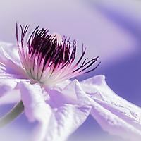 Bild 06 - Blüh im Glanze