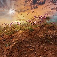 Bild 11 - Komposition - Insel des Lichts