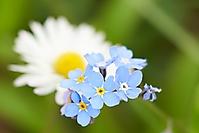 Bild 03 - Frühlingsarrangement