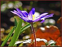 Bild 12 - endlich Frühling