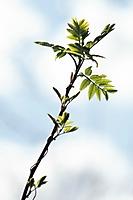 Bild 13 - Frühlingserwachen im Gegenlicht