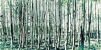 Bild 09 - Junger Wald
