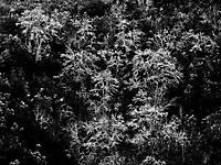 Bild 06 - Geisterwald