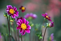 Bild 05 - Spätsommerblüten