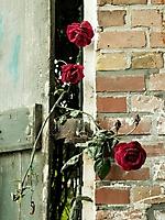 Bild 15 - Zwischen Tür und Angel