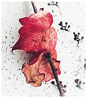 2020 Dezember - Herbst